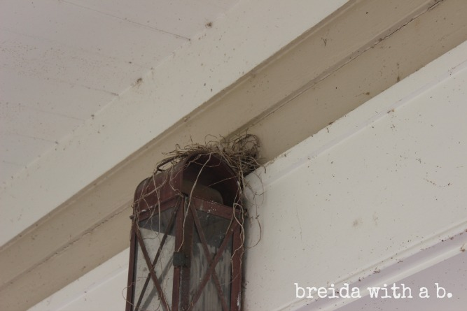 How to keep birds off porch light
