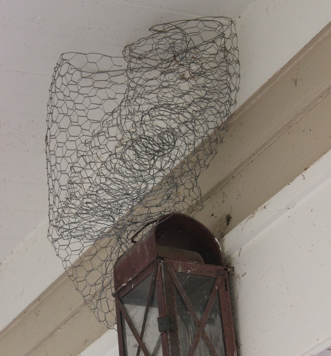 Bird Nest on my porch light